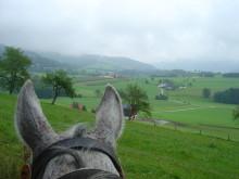 Hästnäringens Ungdomssatsning med fokus på framtiden