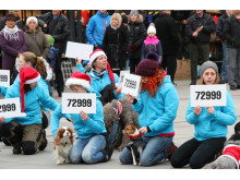 Deltagare i hundflashmob i december 2013