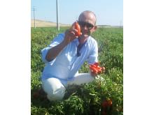 Christian Di Luca provsmakar solmogna plommontomater på ett fält i Puglien, Italien.