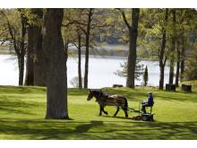 Gräsklippning med häst på Sånga-Säby
