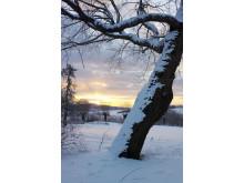 Vinter på Thoresta
