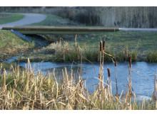 Dammen i Kyrkparken