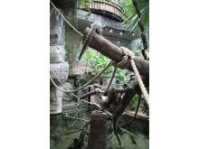 Sengångare och nyfiken vitörad silkesapa