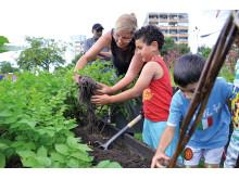 Planteringar utan gränser