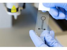 Krets av cellulosa och kolnanorör från 3D-bioskrivare