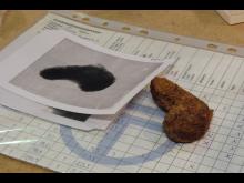 Arkeologiskt golffynd i Sigtuna utmanar Skottland