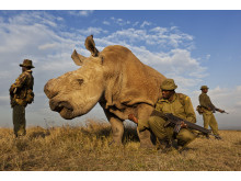 Brent Stirton / Getty Images Reportage