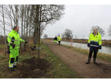 Pressbild - Extraplantering vid Göta kanals trädallé - bild 4
