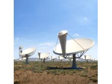 Antennerna i SKA som de kan komma att se ut. (Bild: SKA Organisation)