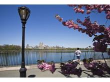 USA, New York, Central Park