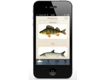 Fisknyckeln - app om fiskar