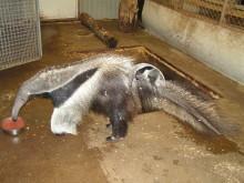 Unik födsel blev årets julklapp på Parken Zoo