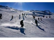 Skiløbere på løjpe