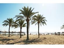 Bravo Tours Mallorca Alcudia