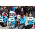 Hundar i aktion mot hiv/aids