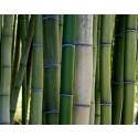 Bamboo in Construction: Today's Renewable Building Resource