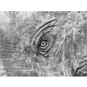 Mårten Lange, The Elephants Eye ur serien Antoher Language, 2012, Göteborgs konstmuseum