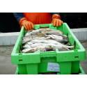 Ransonen för torskfiske ändras