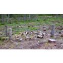 Skogsbruket ska förbättra hänsynen till kulturmiljöer