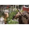 Smålands största fototävling lockar Smålandsambassadörer