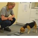 Generna styr när hunden ber om hjälp