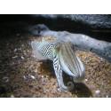 2013 – Havets Hus fyller 20 år och inviger ett nytt akvarium