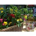 Blanda ätbart och blommor.