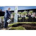 Landsbygdsminister Sven-Erik Bucht planterar träd i Almedalen