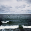 Amerikansk mask kan förbättra miljön i Östersjön