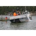SEA LIFEn akvaristit silakkajahdissa - vuoden haastavimman kalansiirto-operaation tarjoavat kotimaiset sillit