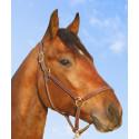 Mister J.P. - nominerad till Årets Häst