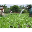 Mat- och dryckesföretag går samman för att möta globala vattenutmaningar