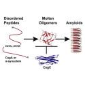 Parkinsonsproteiner betvingas