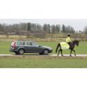 Bilföraren betalar oftast vid olycka med häst