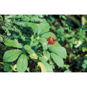 Ginseng Industry Market Research Report - 2015