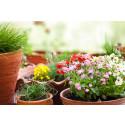 Ni tips til hagen for å øke inntrykket av eiendommen