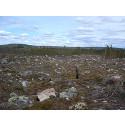 Död ved i yngre produktionsskog främjar lavarna