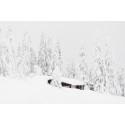 SkiStar AB: Fantastisk mye snø i fjellet