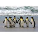NEW – Ramblers Worldwide Holidays  - Falkland Islands and Chile
