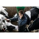 Nyt ejerskiftelån til yngre landmænd