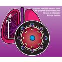 Patienter med EGFR-muterad tumör i lungan får god effekt med Tarceva