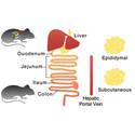 Gut microbiota regulates antioxidant metabolism