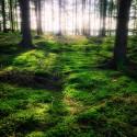 Skogarna runt Färna Herrgård & Spa