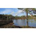 Finnemarka valgt ut som en av Norges vakreste naturperler