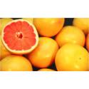 Positiv prognos för årets säsong av Florida grapefrukt