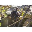 Kolmårdens schimpanser har fått större område att upptäcka