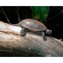 KUTSU: Kilpparikolo-uutuusnäyttelyn avajaistilaisuuteen