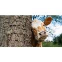 Dalsjöfors Kött lanserar ny prislista för inköp av djur