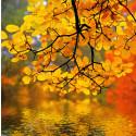 Fem spanske skove fulde af oplevelser og efterårsfarver