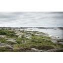 HaV-analys: Fiske bör regleras ytterligare i 30 marina skyddade områden i Sverige